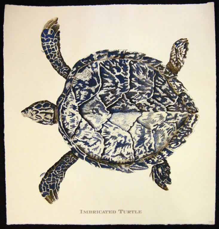 unframed turtle illustration