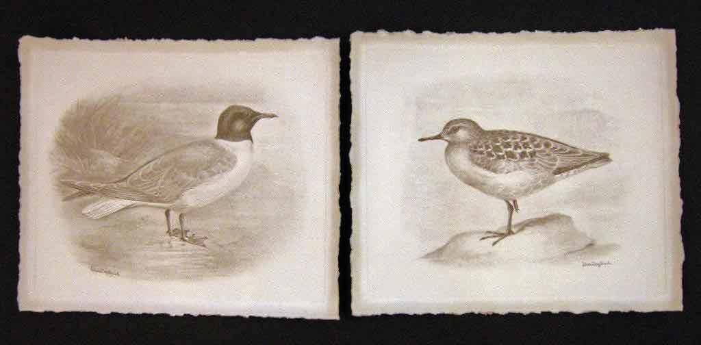 bird illustrations on handmade paper