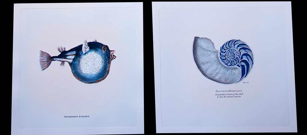 unframed-nautical-fish-artwork